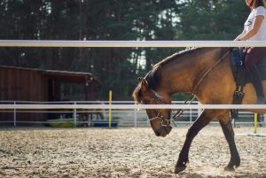 Les accessoires indispensables pour le cavalier et le cheval